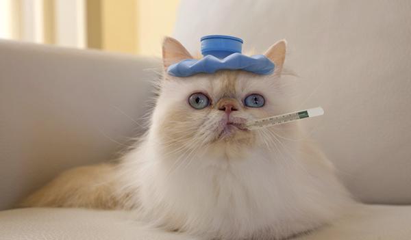 gato gripe