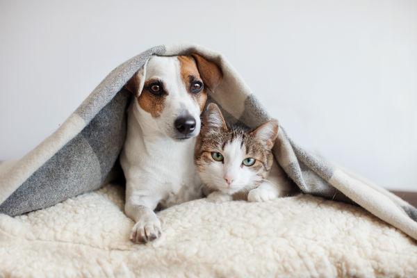 gato e cachorro gripe